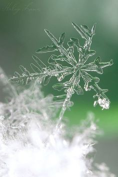 Snowflake #bokeh #photography