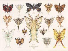 Oliver Ledroit various fairies