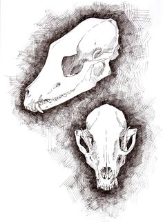 fox skull study. for more, go here!  Like the crosshatching
