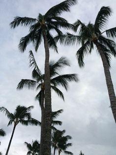 tumblr palm trees!!!