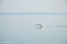 """""""Not all birds can fly. What separates the flyers from the walkers is the ability to take off."""" Carl SaganWeekend at the lake Balaton, the Heart of my country. Carl Sagan, All Birds, Budapest, Landscape, Patterns, Architecture, Blog, Photos, Diy"""