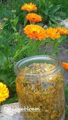 Natural Oils, Natural Health, Herbal Remedies, Natural Remedies, Coconut Oil Lotion, Lotion Recipe, Herb Recipes, Plant Health, Edible Plants