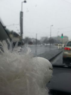 Today in the street...wet wet wet...brrrr