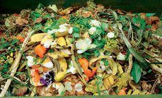 Fruchtschalen sind für den Kompost durchaus geeignet