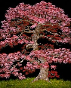 """""""Red Maple Bonsai"""" is an acrylic painting of a Red Maple Bonsai Tree on a black background.  This is a powerful image of a majestic bonsai tree."""