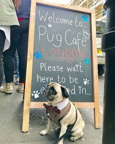 Last weekend the pug event of the year occurred in London and Cate & @dougthepugtherapydog went along to the @popuppugcafe for a fun time. Read all about the Pop Up Pug Cafe London edition at www.thepugdiary.com #thepugdiary #Pug