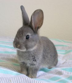 Bunnies. This is what Kirby looked like when I got her 10 years ago^_^