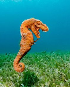 Bigfoot and the loch ness monster are just two of the mystical animal hybrids many believe to be real. Then there are other common hybrids that are actually proven to exist… like golden retrievers and poodles, technically known as golden doodles.  Combining two animals into one is risky business ...