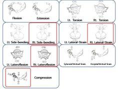 「craniosacral motion」の画像検索結果