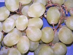 green_grapes_h.jpg By loneangel