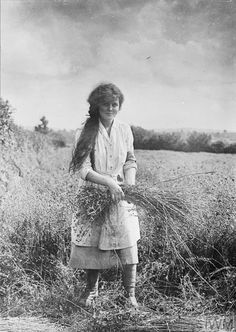 A female farm worker pulling flax on a farm in Yeovil, Somerset.