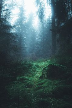 New post on travel-story - Forest and Nature - - Piercing Modelle - Nature travel Magic Forest, Dark Forest, Nature Pictures, Amazing Nature, Beautiful Landscapes, Wonders Of The World, Mother Nature, Nature Photography, Beautiful Places