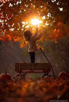 Radio Flyer by Jake Olson Studios Photography Fall Pictures, Fall Photos, Autumn Day, Autumn Leaves, Maple Leaves, Autumn Girl, Autumn Trees, Radio Flyer, Seasons Of The Year