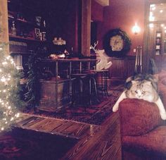 Meredith is so utterly BORED by my Christmas cheer. -Taylor Swift-
