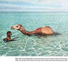 A image from Robyn Davidson's trip (told in the book Tracks)
