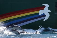 Dolphins swim alongside the Rainbow Warrior in the Cook Strait, New Zealand; very close to where Texan oil company Anadarko intends to begin prospecting later this year.  Photographer: Nigel Marple / Greenpeace