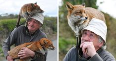 Homer's Heroes come in all shapes and sizes. And some of them come from as far away as County Kilkenny in Ireland. Patsy Gibbons found two abandoned fox pups and, while most people would simply have done nothing, devoted himself to nursing them Fox Pups, Pet Fox, Bored Panda, Pretty Pictures, Animal Kingdom, Animals Beautiful, Animal Pictures, Fur Babies, Wildlife