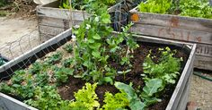 A Vegetable Garden That Waters Itself — Build It Easily, for Free