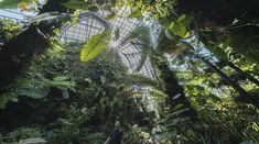 Gardens by the Bay | Grant Associates Planet Earth 2, Gardens By The Bay, Endangered Species, Futuristic, Orchids, Plant Leaves, Exotic, Tropical, Clouds