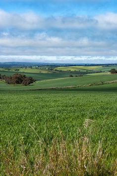 Adelaide Hills, South Australia. Beautiful rolling hills and green paddock.