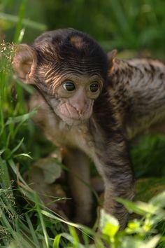 Sweet little monkey baby <3
