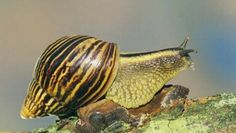 How Long Do Snails Sleep Really? Didn't You Always Wanted To Know