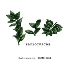 Vita L: портфолио стоковых фотографий и изображений | Shutterstock Stock Illustrations, Plant Leaves, Plants, Plant, Planets
