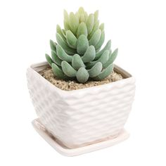 Beautiful succulents won't die easily and make small spaces so much cuter $16