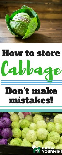 how to store cabbage #garden#gardening#growyourmint.com