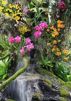 beautiful-orchid-garden-15798717.jpg (319×450)