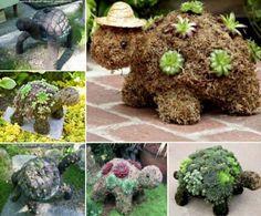 Turtle-Succulent Planters