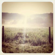 morning mist on the neighbor's autumn field just past sunrise