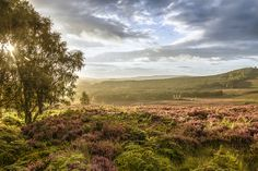Photography of Northumberlands Countryside