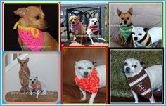 Posh Pooch Designs Dog Clothes: Free Crochet Patterns