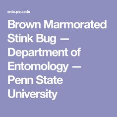 Brown Marmorated Stink Bug — Department of Entomology — Penn State University Insect Species, Stink Bugs, Japanese Beetles, Grubs, State University, Pest Management, Lawns, Birch
