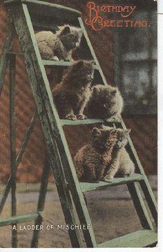 A ladder of mischief