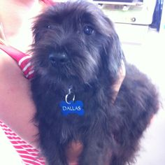 Schnoodle!! Gimme!