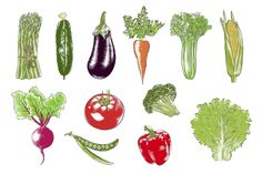 Collection of hand-drawn vegetables by Akimo Mia on can find Vegetables drawing and more on our website.Collection of hand-drawn veget. Easy To Digest Foods, Vegetable Drawing, Thanksgiving Vegetables, Vegetable Illustration, Low Fat Cheese, Low Fat Yogurt, Whole Wheat Pasta, Multigrain, Art Case