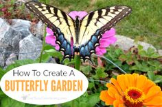 Gardening With Containers Flower Garden With Butterflies: Tips To Create A Butterfly Friendly Garden - Fill your flower garden with butterflies! Learn how to design and create your own butterfly friendly garden, and what plants attract butterflies. Gardening Courses, Gardening Books, Container Gardening, Flower Gardening, Urban Gardening, Organic Gardening, Flowers Garden, Gardening Tips, Garden Types