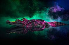 """moon83: """" Animal Lectures #01 Caiman crocodilus by Andrew McGibbon WWW // Behance // Tumblr """""""
