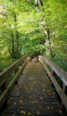 Top 75 Hikes near Asheville in the North Carolina Mountains #blueridgeparkway #fall