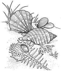 seashells ocean underwater sea coloring pages colouring adult detailed advanced printable kleuren voor volwassenen coloriage pour adulte anti stres