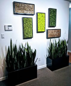 Our new sample Living Moss Wall! Eco=Friendly and Artsy! Plantique is a full service plant care company. We design, install and maintain your plants so you don't have to! Moss Wall Art, Moss Art, Diy Wall Art, Wall Decor, Plant Art, Plant Decor, Moss Graffiti, Moss Decor, Green Garden
