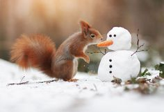 Julian Rad, a wildlife photographer from Austria, shows the most lovable wildlife shots of squirrels, hamsters, and foxes that you've probably ever seen. Hamsters, Ground Squirrel, Red Squirrel, Wildlife Photography, Animal Photography, Spring Photography, Happy Fox, Cute Little Things, Tier Fotos