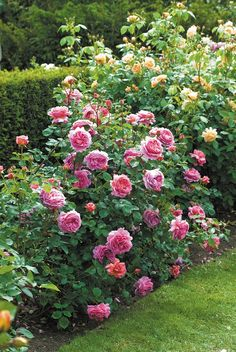 rose garden 93 Beautiful Garden Id - garten Beautiful Flowers Garden, Beautiful Roses, Beautiful Gardens, Exotic Flowers, Purple Flowers, English Garden Design, Rose Garden Design, David Austin Rosen, Growing Roses
