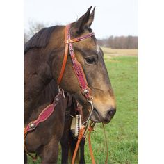 Rosado Browband Headstall- This is Maggie, a horse at my barn ! :) Model material !