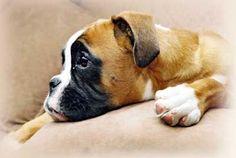 Je hond (her)opvoeden - Hilde Quisquater: hond en advies
