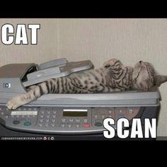 internet cat pictures are the best! @Brigette Swafford Swafford Swafford Poniewaz