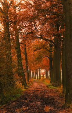 Autumn...what I remember growing up in New England---- There is nothing more beautiful than fall in new england <3