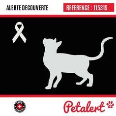 / Chat / Saint-Germain-sur-MorinSeine-et-Marne / France Somme France, Calais France, Kittens Cutest, Pets, Visible, Aide, Movie Posters, Saint Jean, Lyon